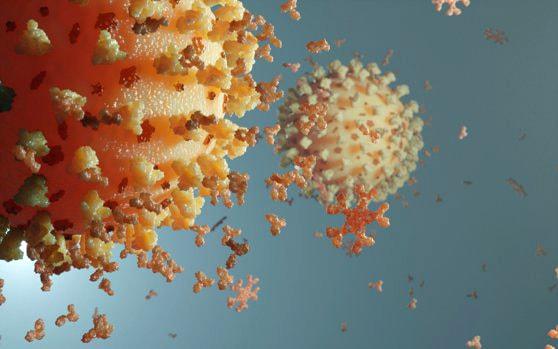 Sistem imunitar vs. Coronavirus: Cât timp durează imunitatea după COVID-19? Studii efectuate şi clarificări OMS