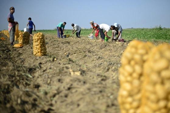 830.000 de fermieri vor depune mai puţine documente pentru plăţile directe