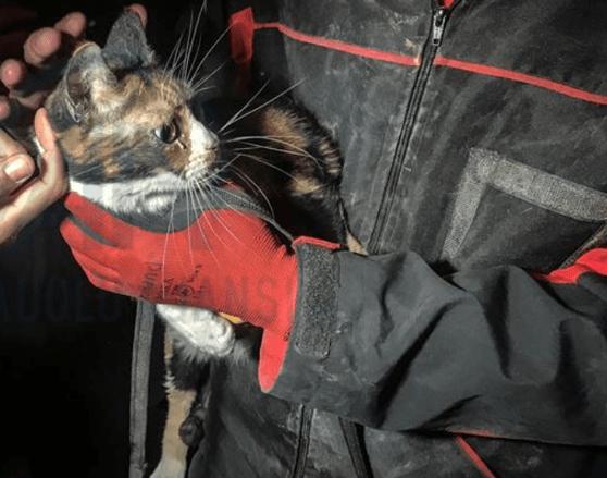 O pisică rănită a fost salvată de sub dărămăturile unui bloc din Izmir de un câine poliţist