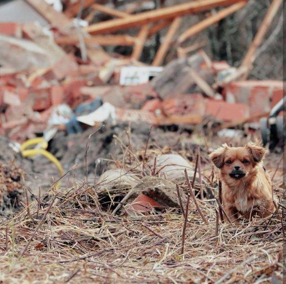 În aşteptarea stăpânului. Povestea animalelor rămase printre dărămături după cutremurul devastator din Croaţia