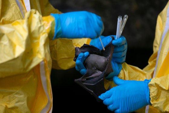 """""""Boala X"""", o ameninţare mondială care se prefigurează în Africa. Avertismentul unui medic de top, implicat în descoperirea Ebola"""