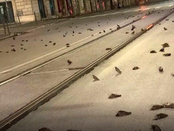 Masacru la Roma: Imagini cu mii de păsări moarte din cauza focurilor de artificii din noaptea de Revelion