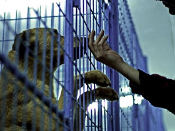 Oraşul Râşnov va avea un adăpost special pentru animalele confiscate de pe domeniul public