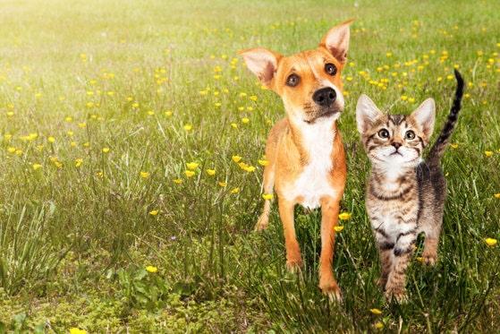 Proprietarii de animale de companie îşi pot vaccina câinii şi pisicile împotriva coronavirusului
